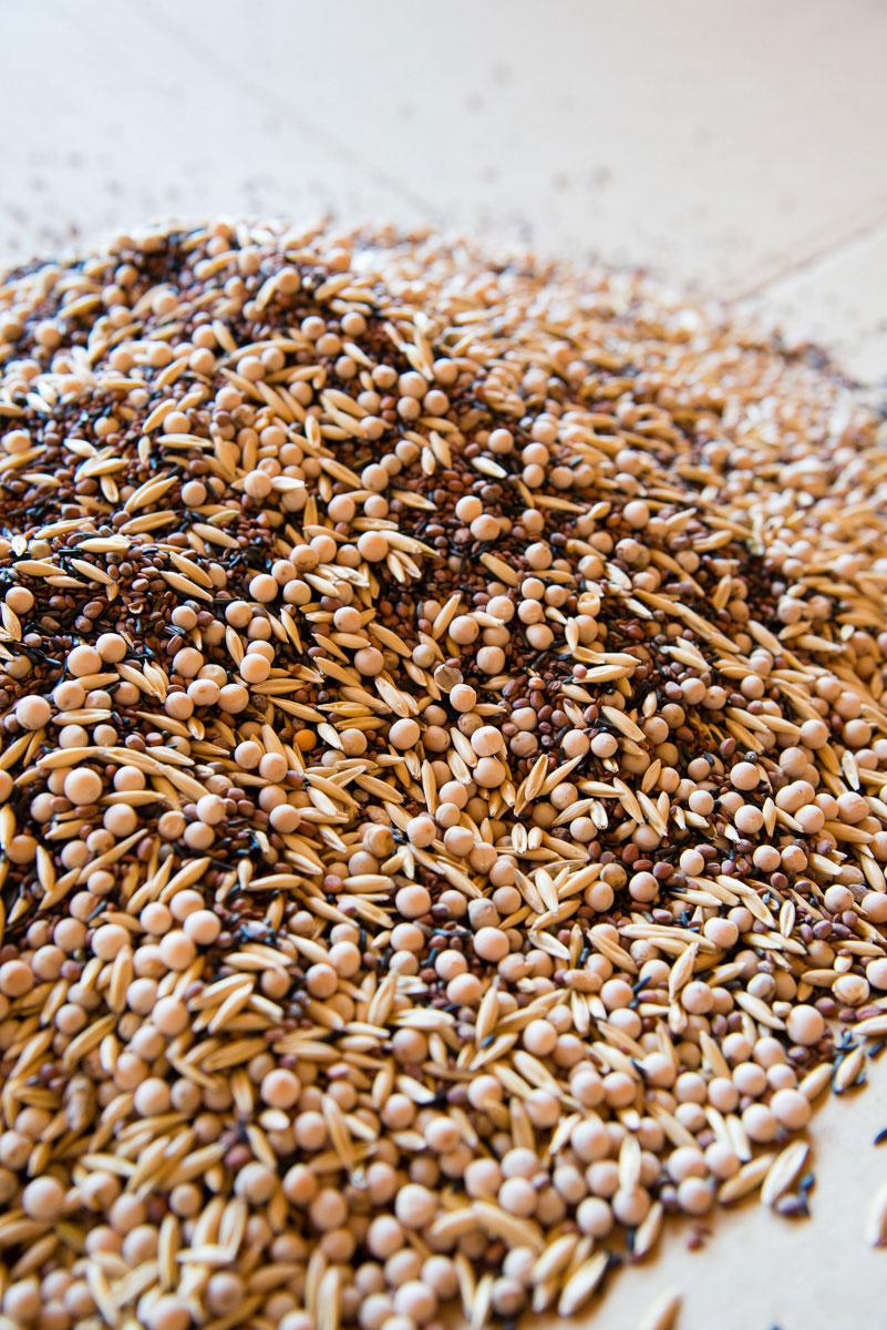 Nahaufnahme von Getreidekörnern