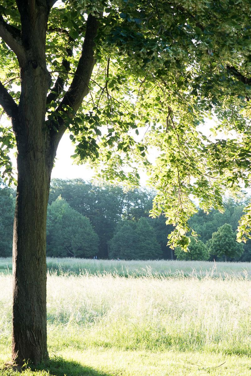 Wiese mit einem Baum im Vordergrund