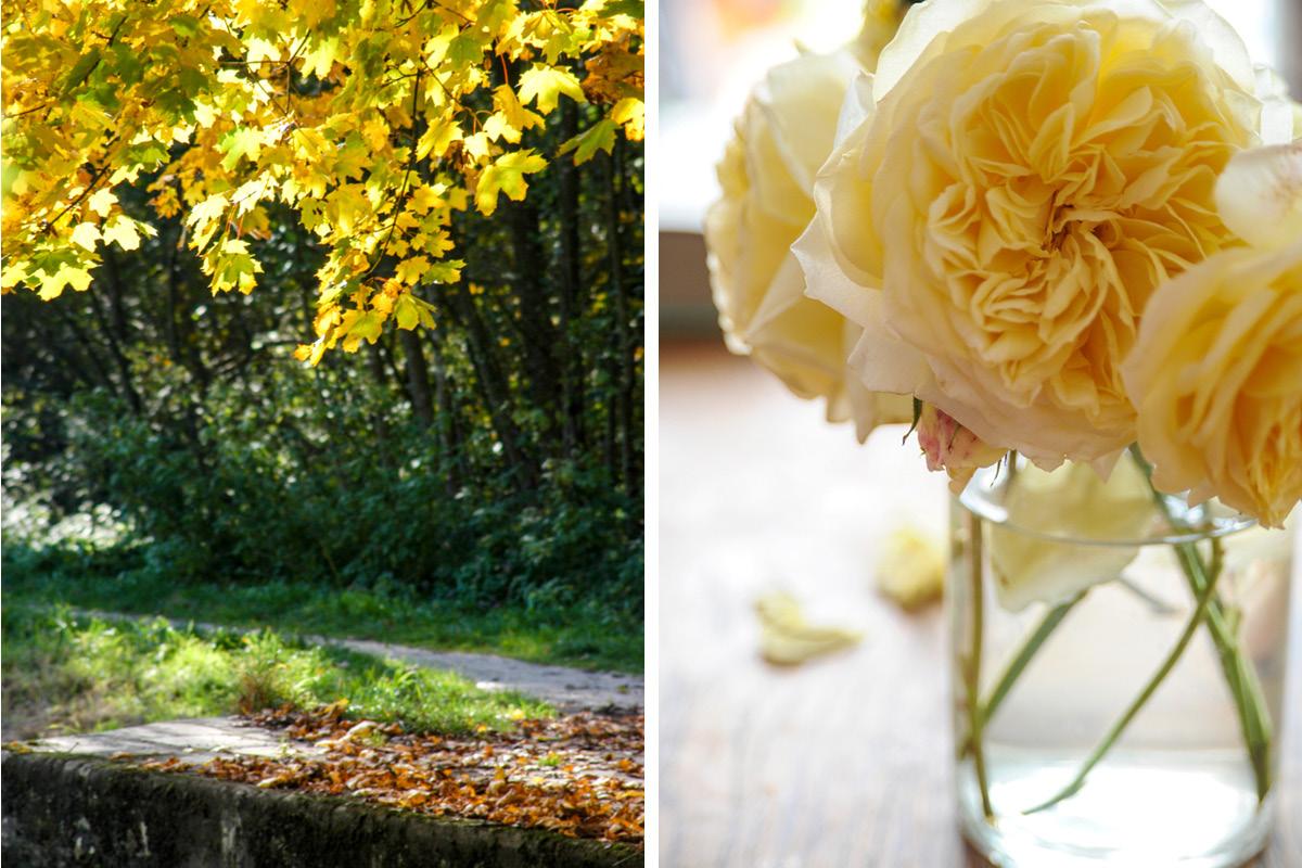 Herbstlaub mit Rosen