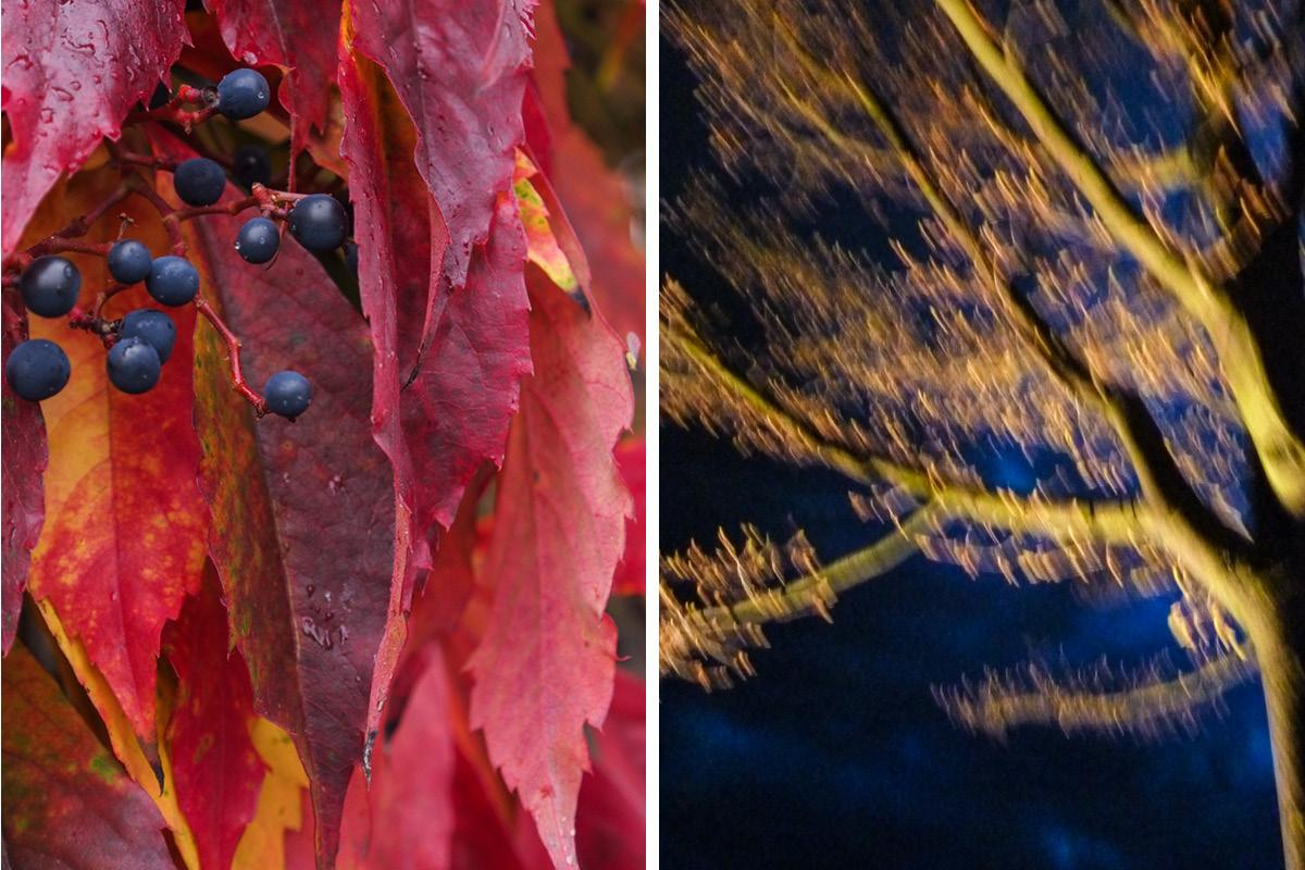 Rotes Laub und Herbstbaum