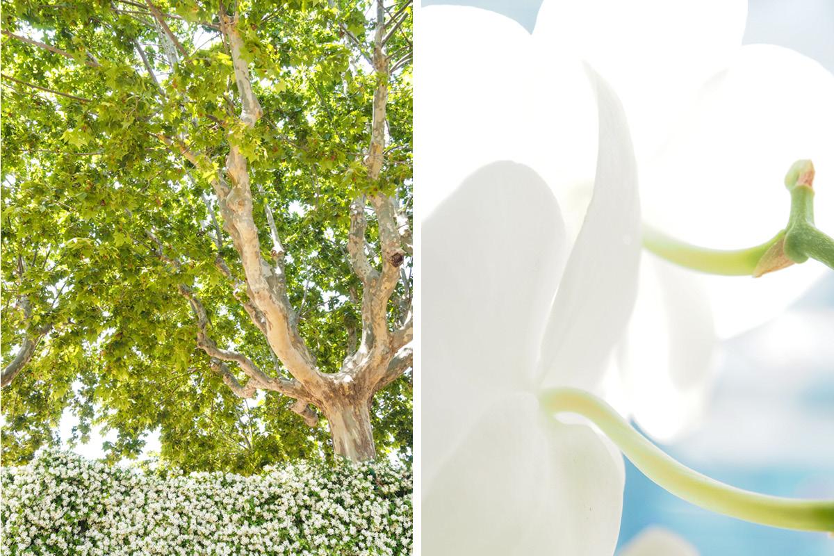 Baum mit Dahlie